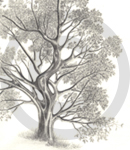 A Detailed Sketch Of A Tree