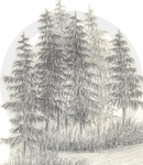 A Pine Tree Cluster Sketch, Inet Innovations