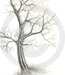 A Detailed Tree Sketch Image One, Inet Innovations