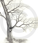 A Detailed Tree Sketch Image Two, Inet Innovations