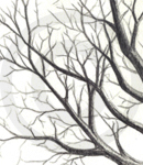 A Sketch Of Tree Branches