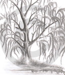 A Graphite Sketch Of A Willow Tree