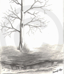 A Winter Tree Sketch